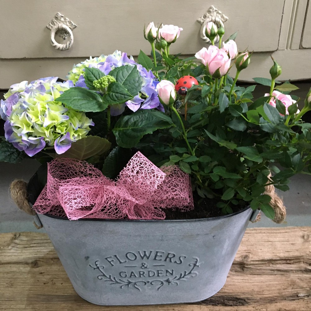 Rose and Hydrangea Planter